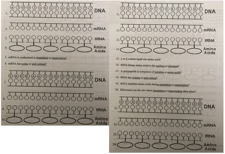 Protein Synthesis Worksheet:... Clutch Prep