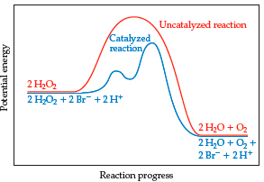 A graph has reaction progress on the x-axis and potential energy on the y-axis. Both axes are unscaled. Both an uncatalyzed and a catalyzed reaction are plotted; both begin with reactants at the same potential energy and lead to products at the same potential energy (lower than the reactants), but their energy profiles vary. For an uncatalyzed reaction, the reactants are 2 H2O2. The curve climbs to a smooth, high peak before leading to the products, which are 2 H2O plus O2. For a catalyzed reaction, the reactants are 2 H2O2 plus 2 Br- plus 2 H+. The curve climbs through two transition states (small peaks with the second higher than the first) before declining to the products (2 H2O plus O2 plus 2 Br- plus 2 H+). Both transition state peaks are lower in the catalyzed reaction than the single peak was in the uncatalyzed reaction.