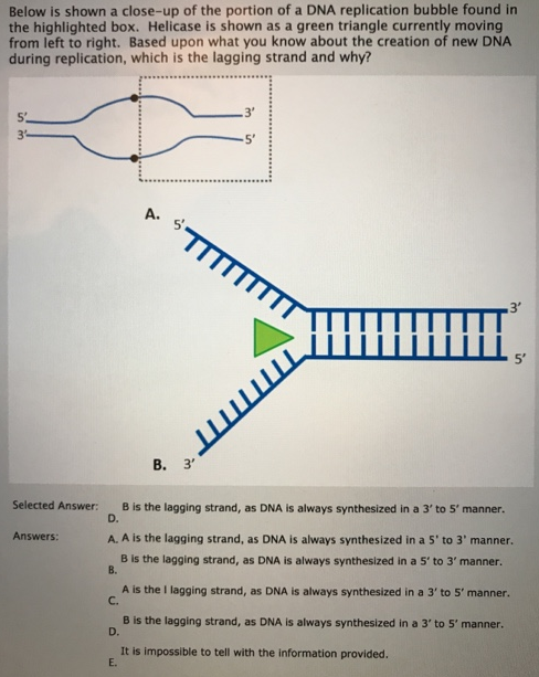 Box Dna Replication Diagram Trusted Wiring Diagrams