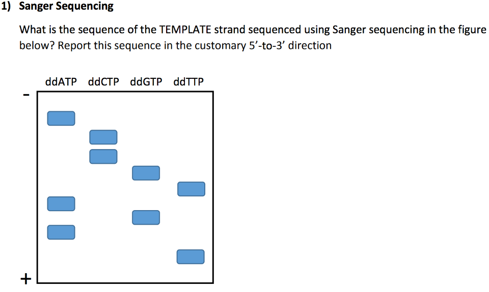 What is thesequence of the TEMPLATE strand...   Clutch Prep