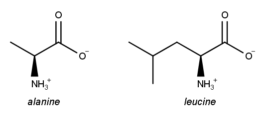 Draw One Possible Dipeptide That Is Formed Clutch Prep