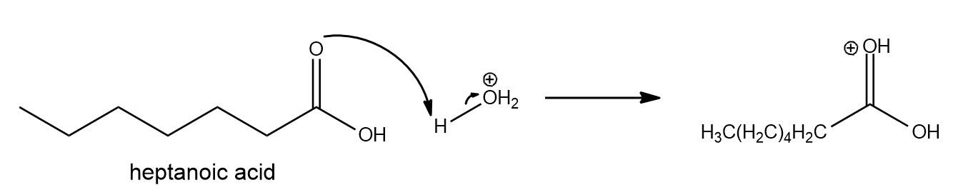 Draw the ester formed by the reaction of h... | Clutch Prep