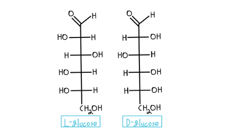 Fischer-projections-of-glucose